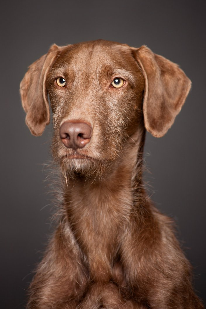 Dog, Hund, Portrait, clean
